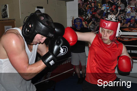link to sparring gallery